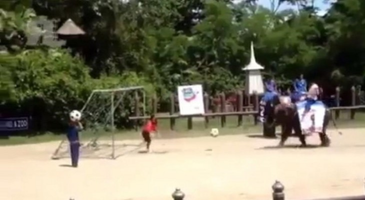Ελέφαντας πανηγυρίζει έξαλλα… γκολ που πέτυχε! (video)