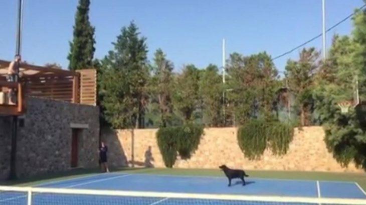 Tο έβαλε από την… βεράντα ο Γιάνκοβιτς (video)